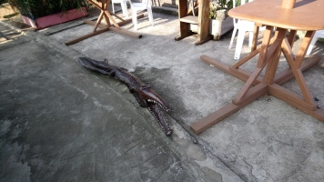 le crocodile en bois